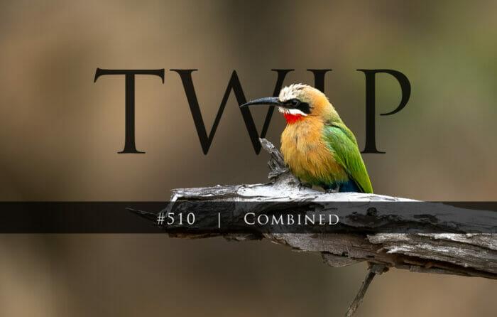 Twip#510 Bee Eater Sdz