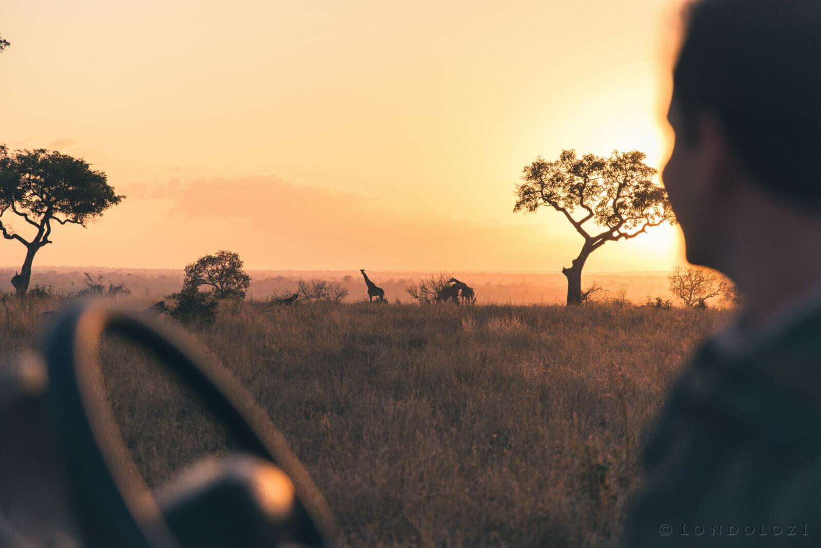Ranger Dean De La Rey on drive at sunset A Ritchie 1827