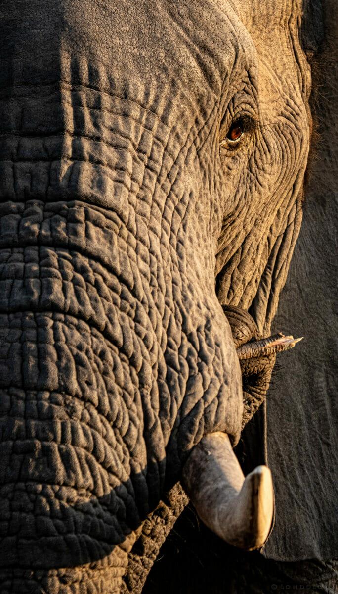 CT Elephant Feeding Close Up