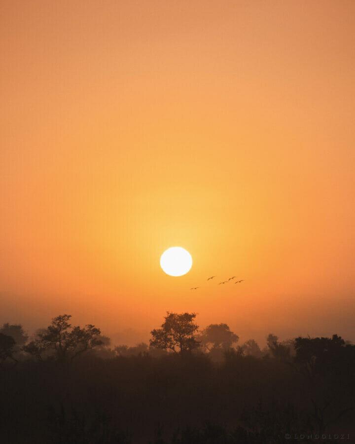 Sunrise hadeda MR