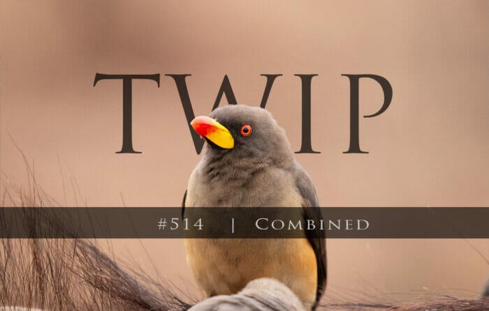 Twip #514 Yb Oxpecker Ct