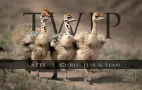 Twip #515 Ostrich Chicks Sz